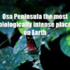 Osa Peninsula The most biologically intense place on Earth